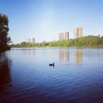watching the ducks on the river - evening ritual in the summer