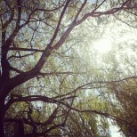 chillin under the willow tree by the river